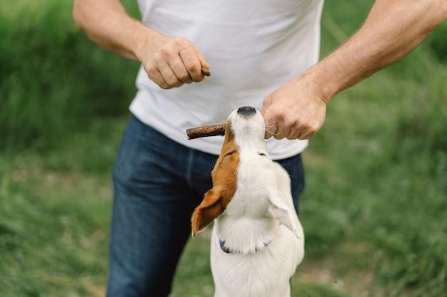 Amistad hombre y perro. el hombre juega perros jack russell terrier en la pradera.
