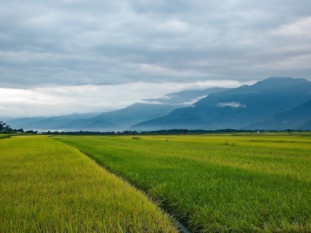 Amplio campo de arroz con nubes rodeado de montañas