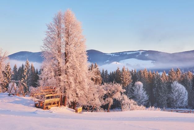 Amplio paisaje de invierno y montañas en invierno. tarjeta de felicitación. montes de cárpatos. ucrania