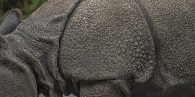 Amplio primer plano de un rinoceronte con un borroso