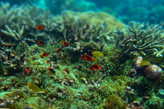 Anémona bajo el mar en la isla cockburn de myanmar