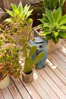 Ángulo alto diferentes plantas en invernadero