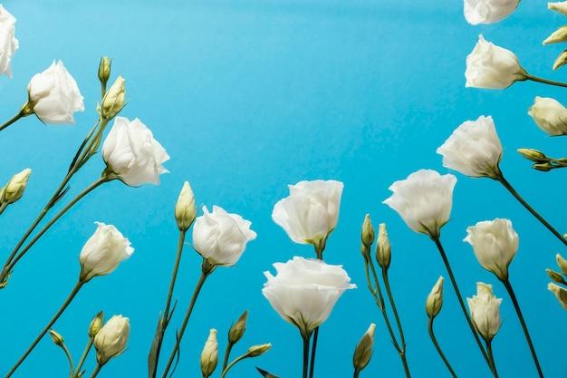 Ángulo bajo de rosas de primavera con espacio de copia