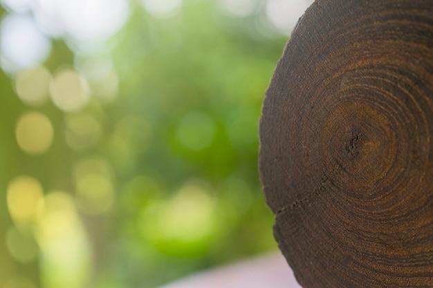 Anillo de crecimiento en la madera del tronco de un árbol.