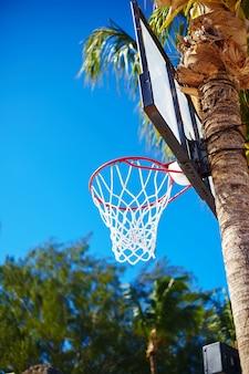 Anillo de tablero de baloncesto en día de verano en cielo azul y palmera verde
