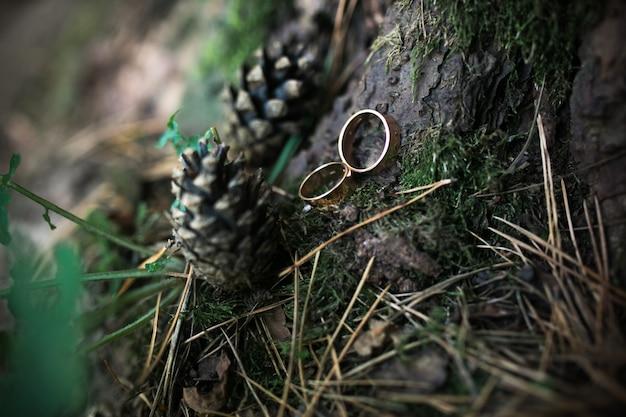 Anillos de boda en la corteza de un árbol
