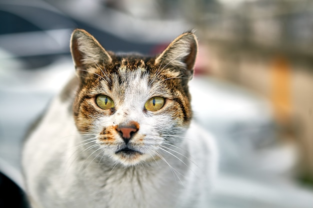 Animal callejero en invierno estambul, gato sin hogar rayado sucio está descansando en la calle.