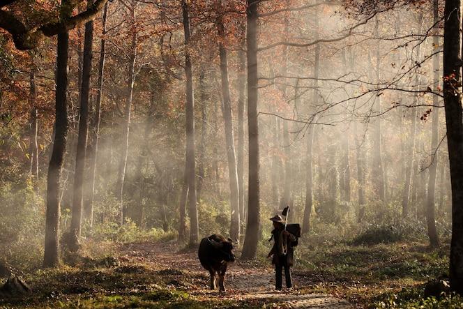 Animal y hombre caminando en el bosque.