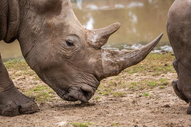 Animales salvajes africanos