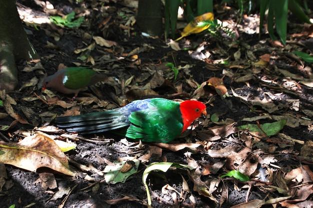 Animales salvajes en el zoológico de taronga en sydney, australia