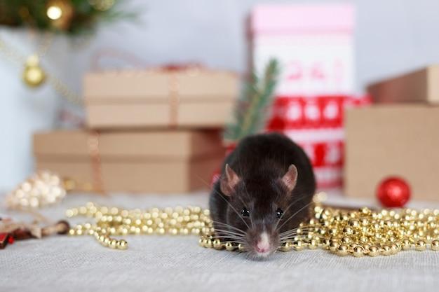 Año nuevo chino rata con decoraciones festivas