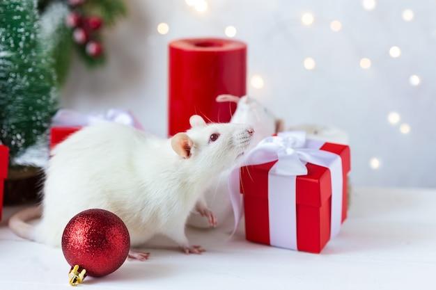 Año nuevo . linda rata doméstica en una decoración de año nuevo. símbolo del año 2020 es una rata.