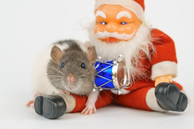 Año nuevo de la rata