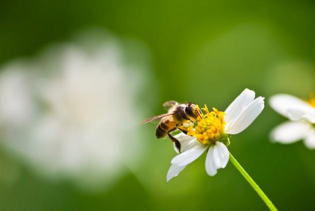 Antena de color verde de abeja blanca
