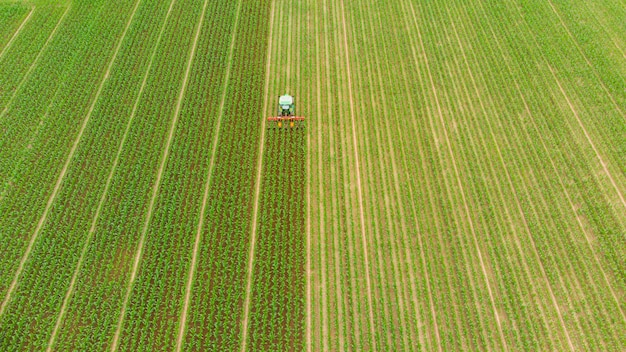 Antena: tractor trabajando en campos de cultivo, ocupación agrícola, vista de arriba hacia abajo de exuberantes cultivos de cereales verdes, sprintime en italia