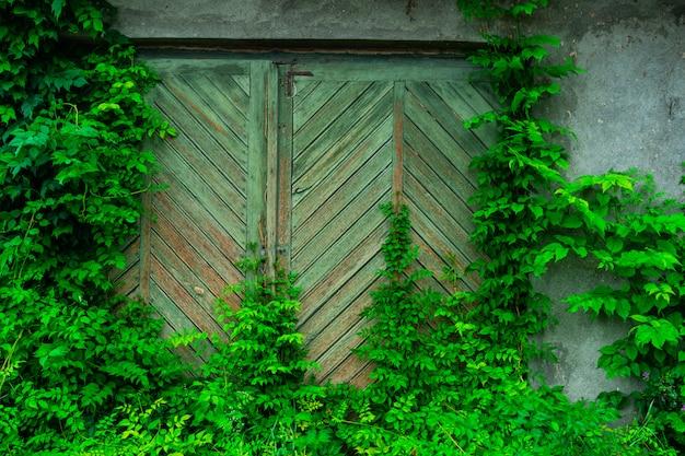 Antigua puerta de madera cubierta por hojas