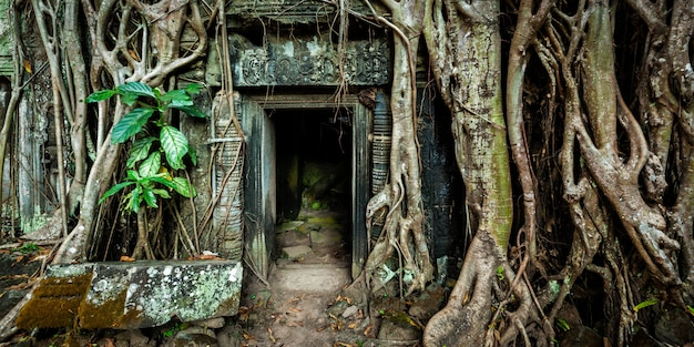 Antigua puerta de piedra y raíces de árboles, templo de ta prohm