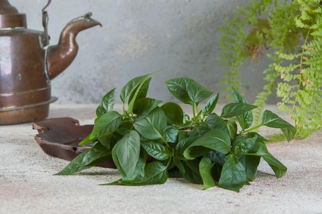 Antigua tetera de cobre y plantas verdes