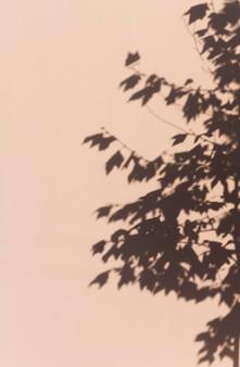 Antiguo muro de hormigón con sombras de hojas