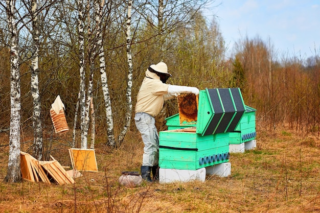 Apicultor abeja limpia la colmena en el bosque