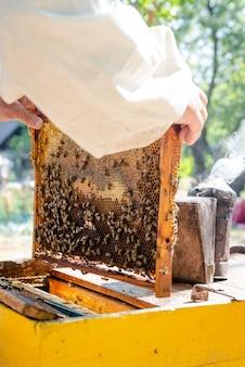 El apicultor abre la colmena, las abejas revisan, revisan la miel. apicultor explorando el panal.