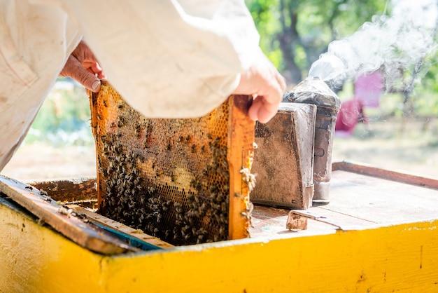 El apicultor abre la colmena para prepararse para la nueva temporada. echa un vistazo a la familia de las abejas en primavera.
