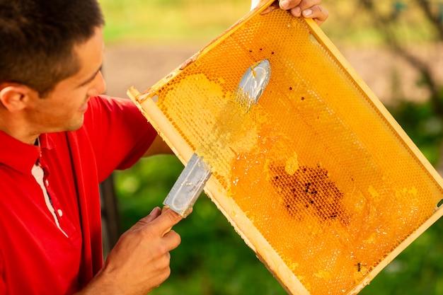 Apicultor cortando cera del marco de panal con un cuchillo eléctrico especial