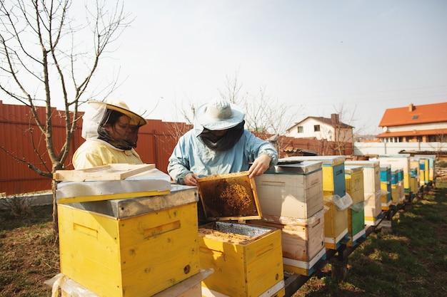 Apicultor inspeccionando la colmena de abejas después del invierno