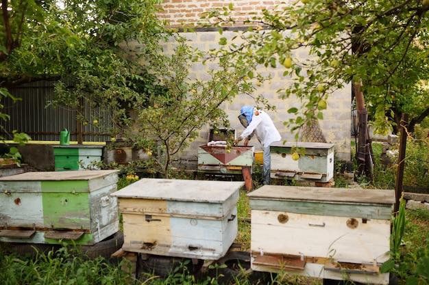 Un apicultor macho saca de la colmena o apiario el marco para las abejas.