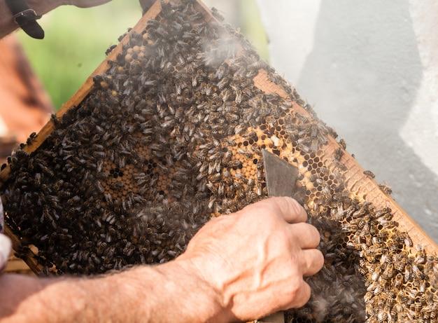 Apicultor sosteniendo el panal de miel con abejas