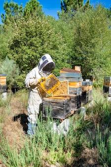El apicultor tiene una celda de miel con abejas en sus manos apicultura apiario