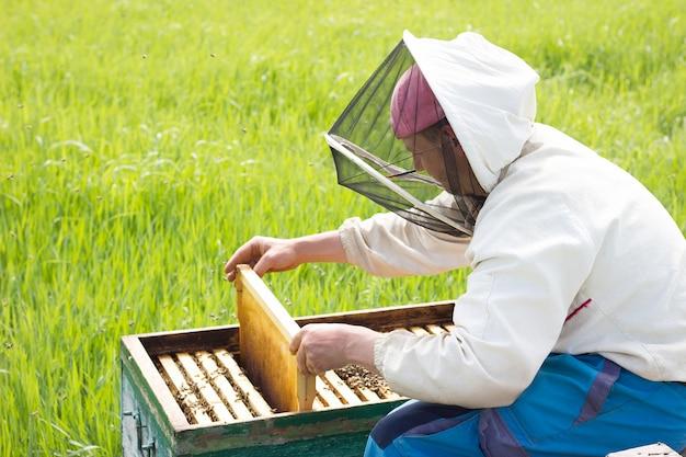 Un apicultor trabaja para recoger la miel. concepto de apicultura. trabajo en el colmenar
