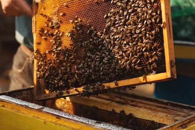 Apicultor está trabajando con abejas y colmenas en el colmenar