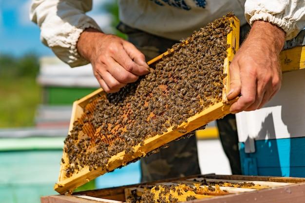 El apicultor está trabajando con abejas y colmenas en el colmenar.