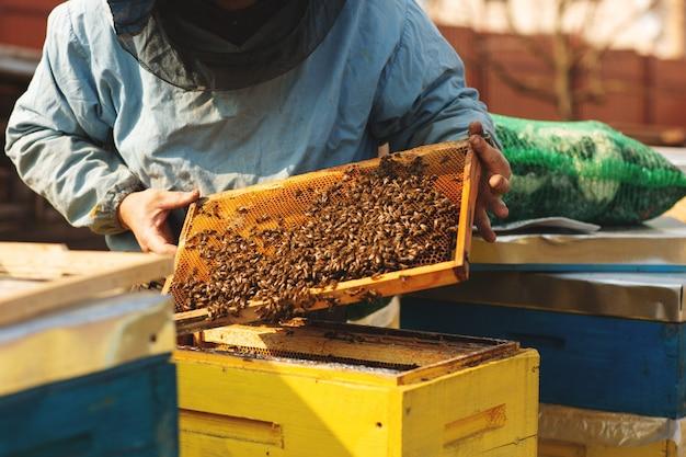 Apicultor está trabajando con abejas e inspeccionando la colmena de abejas después del invierno