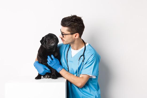 Apuesto joven médico veterinario rascarse lindo pug negro, acariciar a un perro, de pie en matorrales sobre fondo blanco.