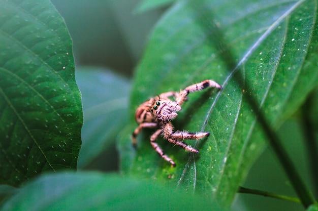 Araña en el bosque