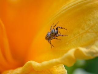 Araña pequeña, los ojos