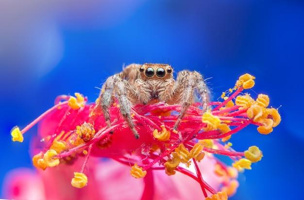 Araña saltarina en la naturaleza