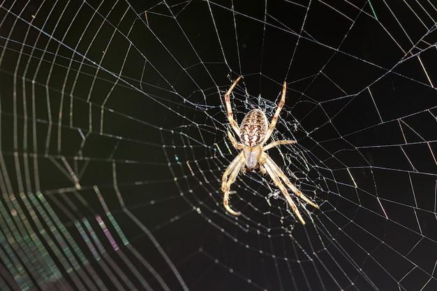 Araña en su web.