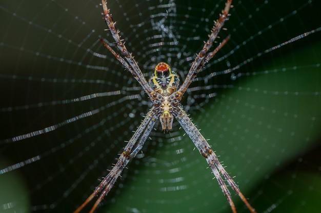 Araña y telarañas con selva verde borrosa