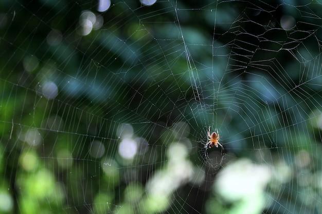 Araña en web