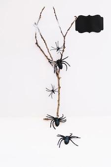 Arañas, arrastramiento, rama