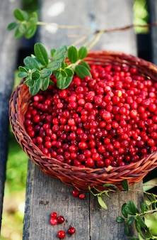 Arándano rojo ecológico fresco