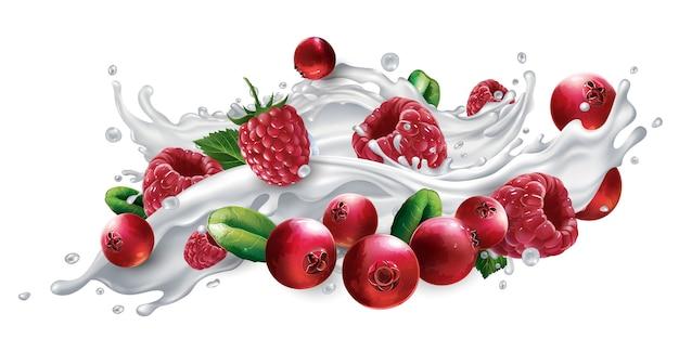 Arándanos y frambuesas en un chorrito de leche o yogur aislado sobre fondo blanco.