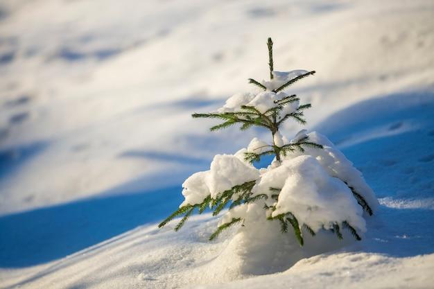 Árbol de abeto tierno joven con agujas verdes cubiertas de nieve profunda y escarcha en el espacio de copia colorido brillante.
