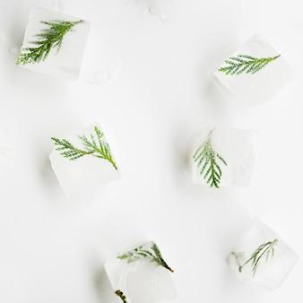 Árbol de agujas en cubitos de hielo.