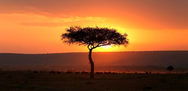 Árbol al atardecer en kenia áfrica