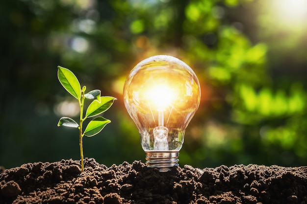 Árbol de bombilla con luz solar en el suelo. concepto ahorra energía mundial y energética