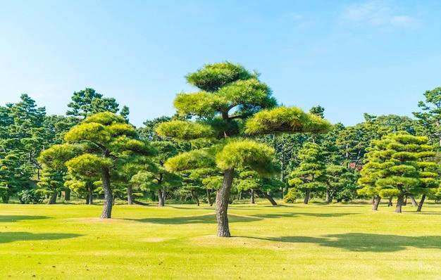 Árbol bonsái en el jardín del palacio imperial en la ciudad de tokio